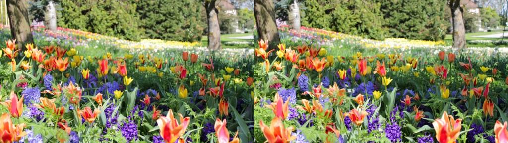 3D Blumenwiese – die Tiefenwirkung in diesem Bild ist enorm