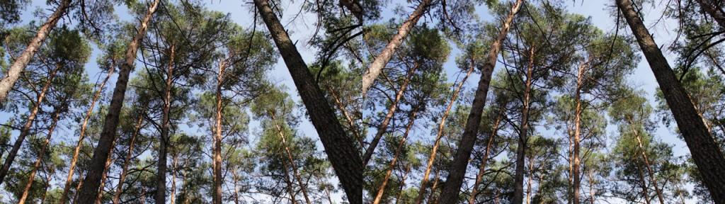 Noch mehr Bäume, hier mit einem nicht ganz so starken 3D-Effekt