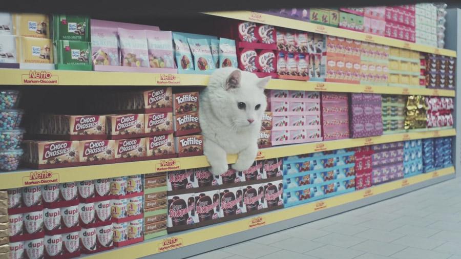 """Ausschnitt aus dem Werbespot """"Netto-Katzen"""""""
